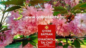 Cseresznyevirág www.onlinetaichi.hu SanBao Tai Chi Chi Kung Nei Kung