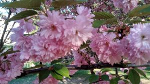 Cseresznyevirag SanBao Tai Chi Chi Kung Nei Kung